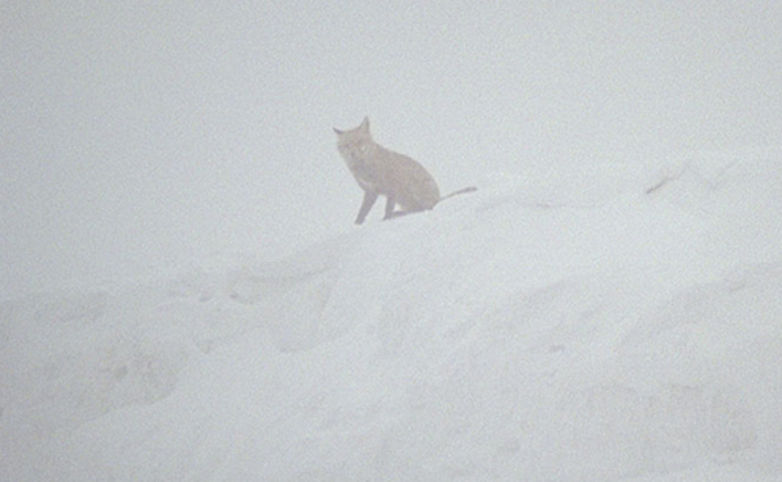 Nebel (Nevoeiro, 2014) de Nicole Vögele