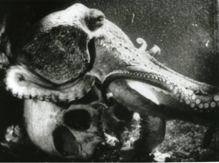La pieuvre (1928) de Jean Painlevé
